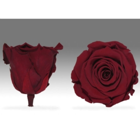 Roses4Ever red-01  XL kwiat