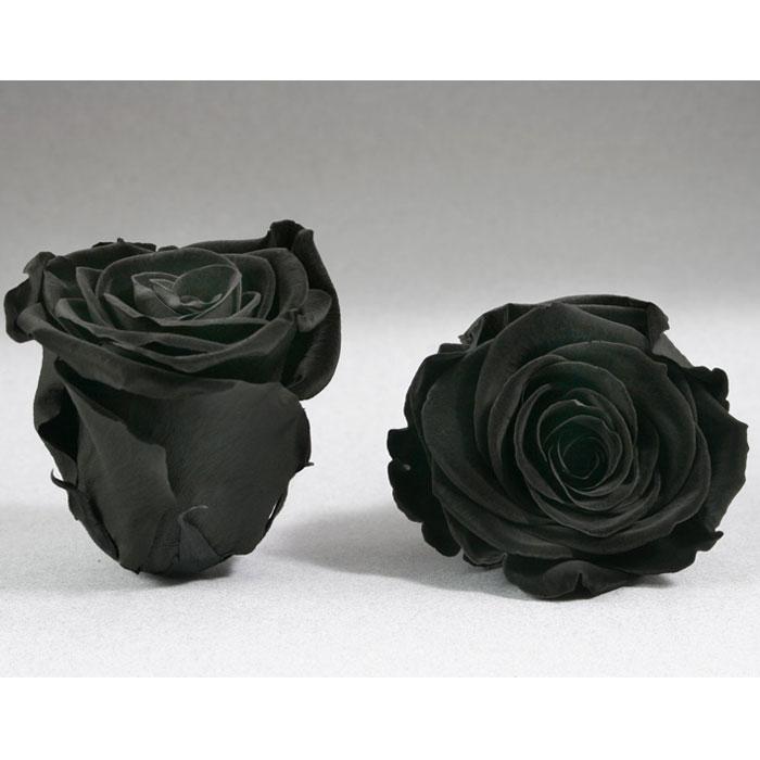 Roses4ever BLA-01 XL,  kwiat