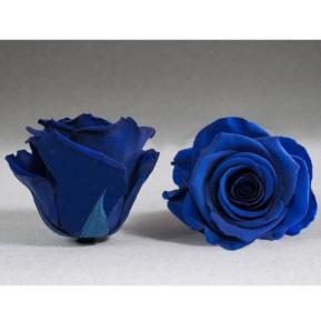 Roses4ever BLU-03 XL,  kwiat