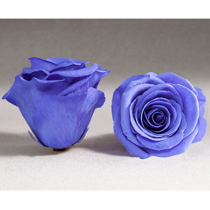 Roses4ever VIO-01 XL,  kwiat