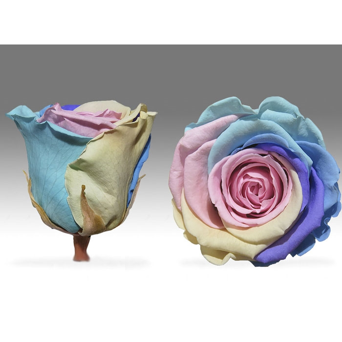 Roses4Ever Candy Rainbow XL