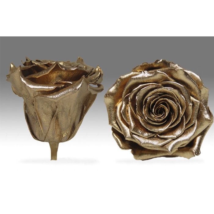 Roses4Ever GOLD XL kwiat
