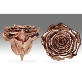 Roses4Ever COPPER XL kwiat