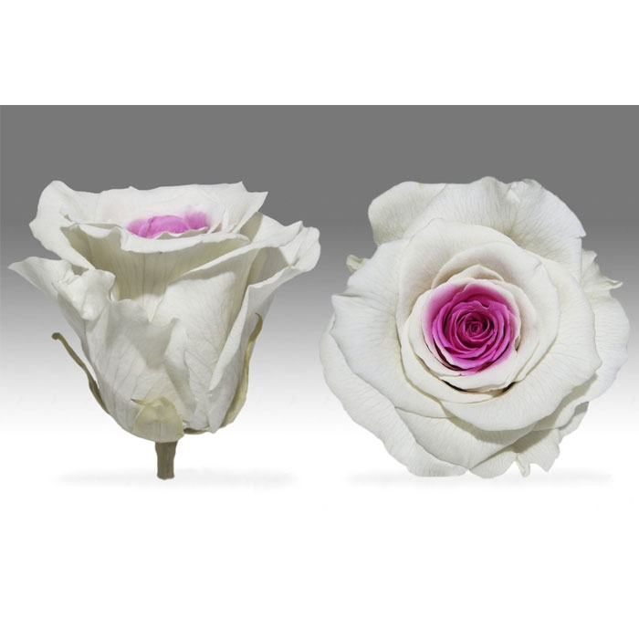 Roses4ever BIC-14 XL,  kwiat
