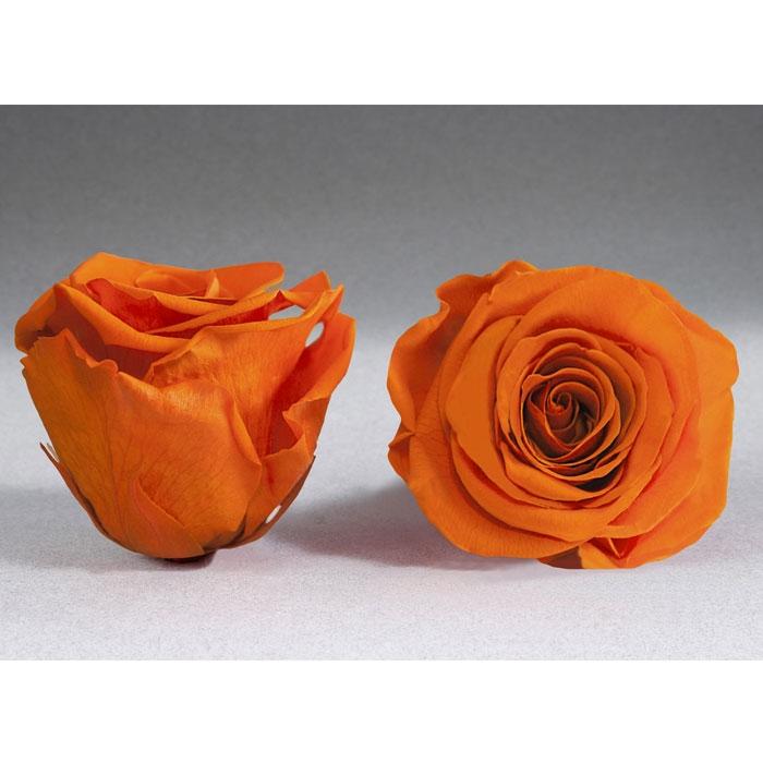 Roses4ever ORA-02 XL,  kwiat