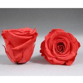 Roses4ever ORA-03 XL,  kwiat