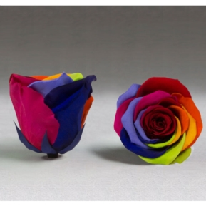 Roses4Ever Rainbow XL
