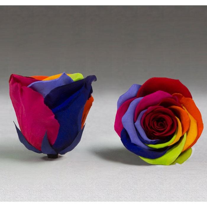 Roses4Ever Rainbow XL