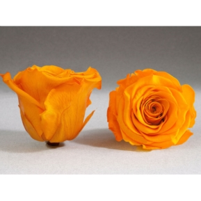 Roses4ever YEL-04 XL,  kwiat