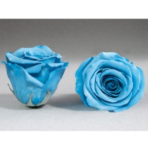 Roses4ever BLU-01 XL,  kwiat