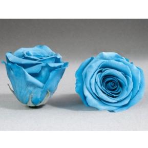 Roses4ever BLU-01 XL,  kwiat