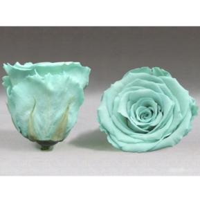 Roses4ever BLU-02 XL,  kwiat