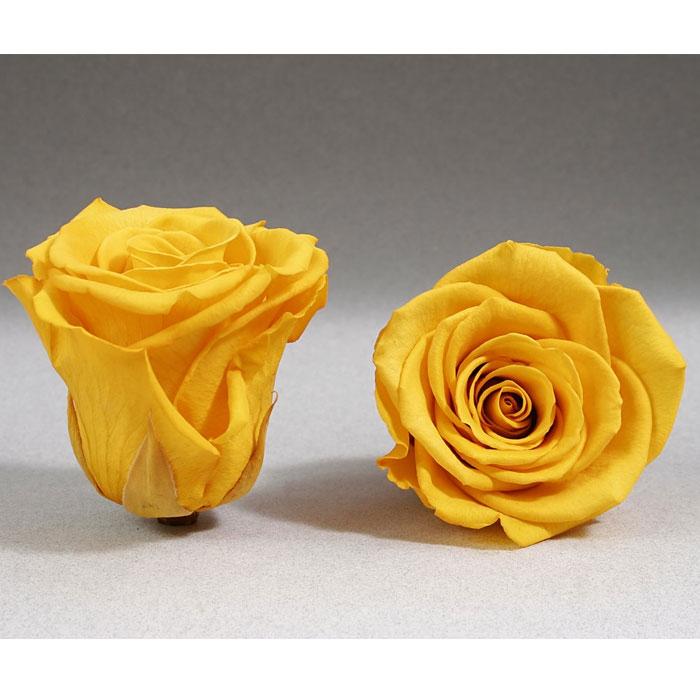 Roses4ever YEL-02 XL,  kwiat