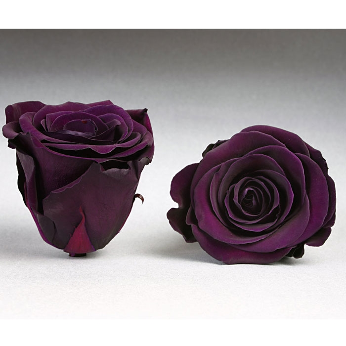 Roses4ever PUR-01 XL, kwiat