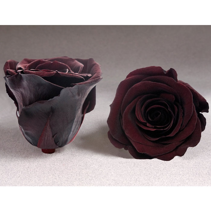Roses4ever CHO-01 XL, kwiat