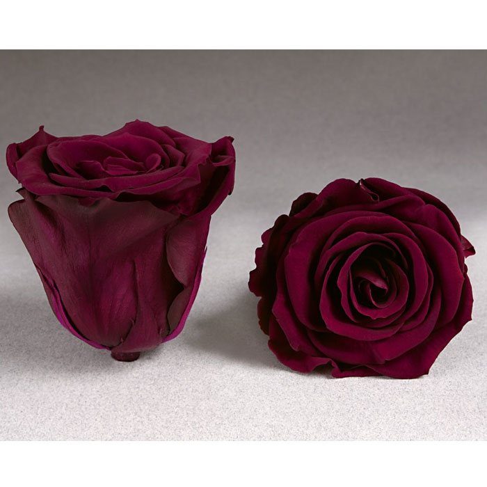 Roses4ever PIN-02 XL,  kwiat
