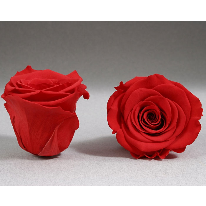 Roses4Ever red-02  XL kwiat