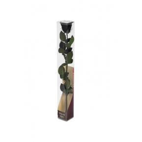 Róża stabilizowana BLA 01 50cm