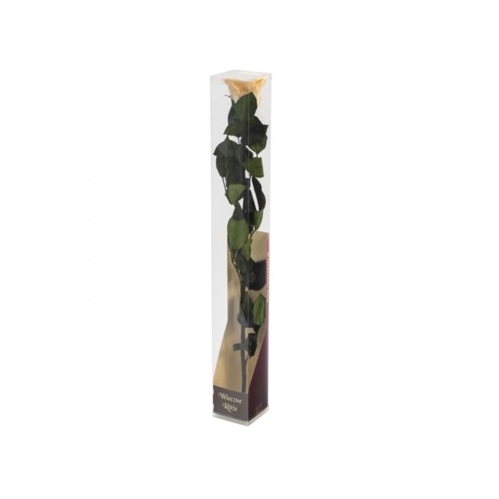 Róża stabilizowana CHA 01 50cm