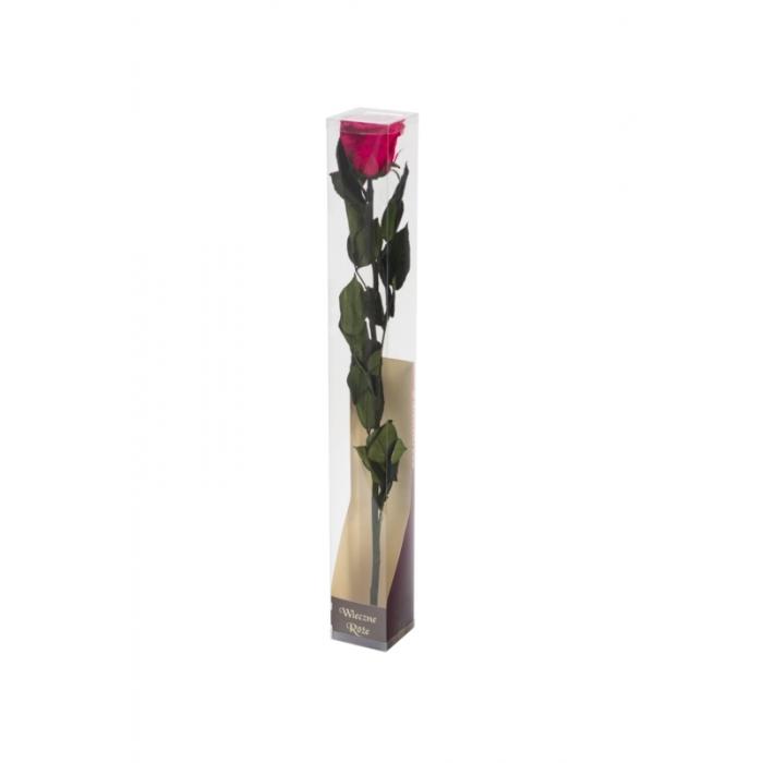 Róża stabilizowana PIN 03 50cm