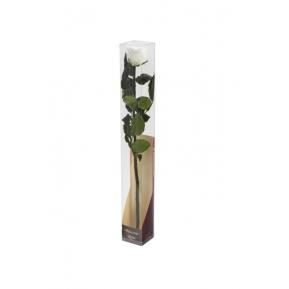 Róża stabilizowana WHI 01 50cm