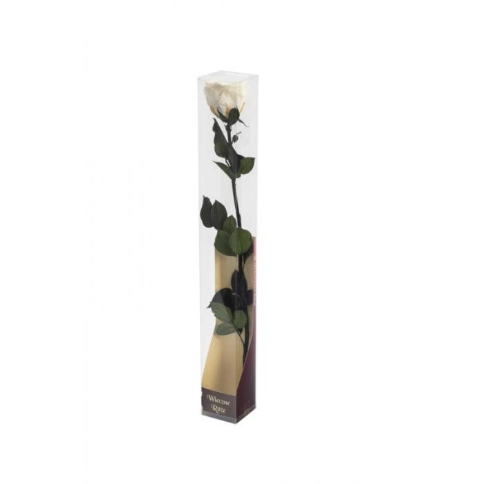 Róża stabilizowana WHI 04 50cm