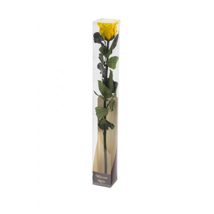 Róża stabilizowana YEL 02 50cm