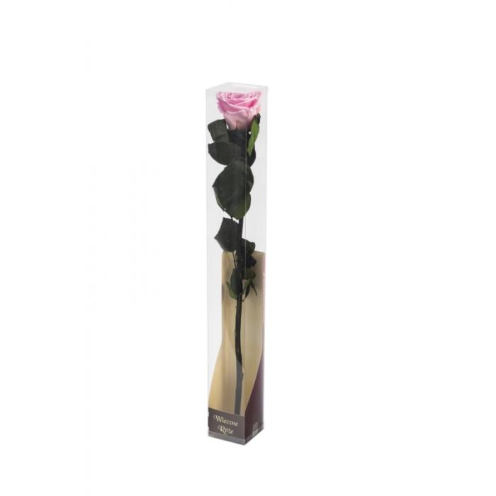 Róża stabilizowana BIC 08 50cm