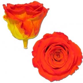 Róża stabilizowana BIC 03 50cm