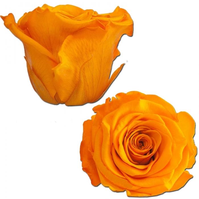 Róża stabilizowana YEL 04 50cm